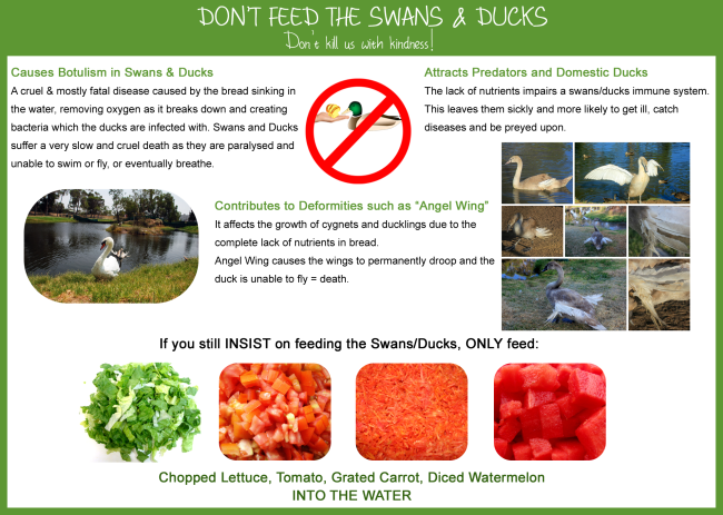 Don't feed the swans and ducks